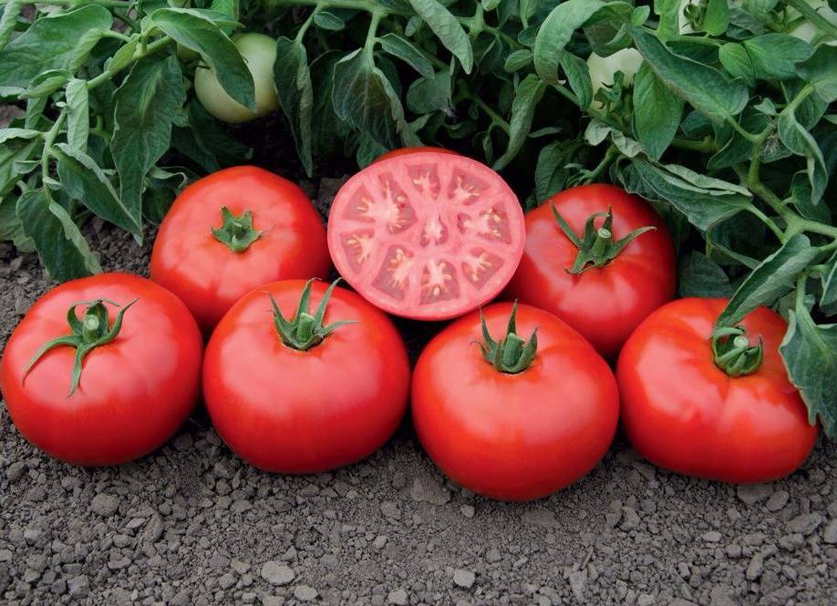 Описание сорта томата Томск и его характеристика