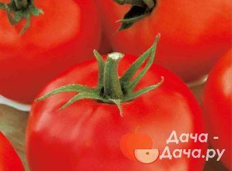 Характеристика и описание сорта томата черная гроздь, его урожайность