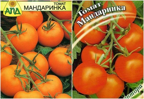 Томат мастер f1: характеристика и описание сорта, выращивание и уход с фото