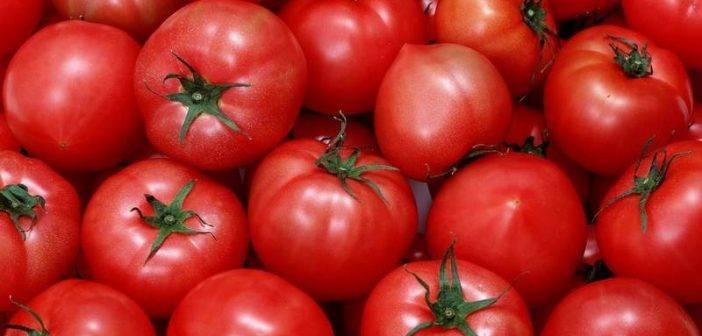 Описание сорта томата нептун и его характеристика