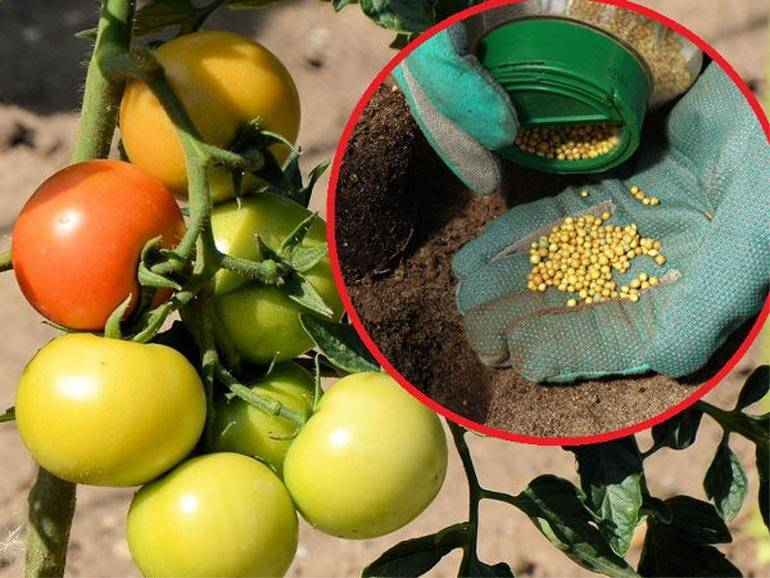 Какими удобрениями подкормить помидоры после высадки в открытый грунт
