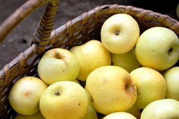 Описание сорта яблонь победа (черненко) и характеристики урожайности