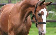 Сколько в среднем могут прожить лошади в домашних условиях, таблица показателей