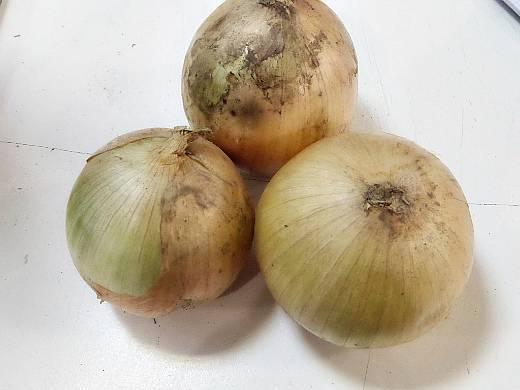 Выращивание лука сорта халцедон: описание и уход