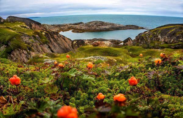 Плюмерия: как вырастить экзотический цветок из семян в домашних условиях
