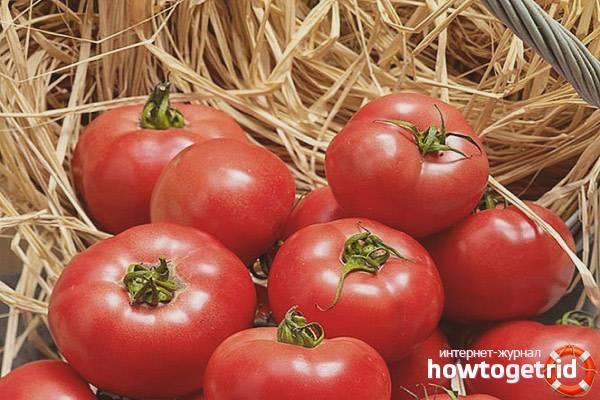 Вкусный и лёгкий в выращивании гибридный сорт томат «новичок розовый»