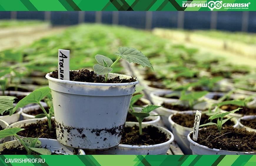 Применение кальциевой селитры в саду и огороде: рассматриваем со всех сторон