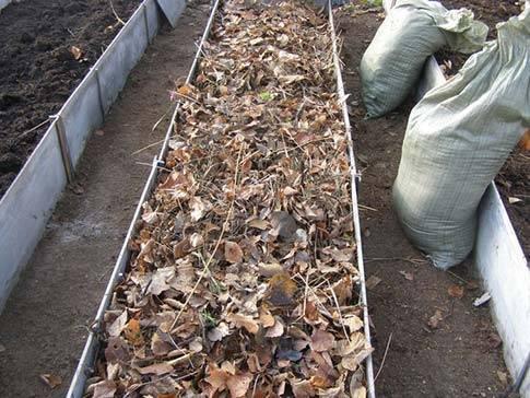 Какую почву любят огурцы и как её правильно обработать до и после посадки