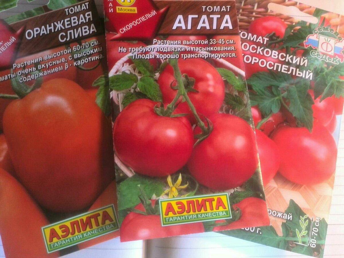 Когда сеять помидоры на рассаду в 2020 году: сроки посева