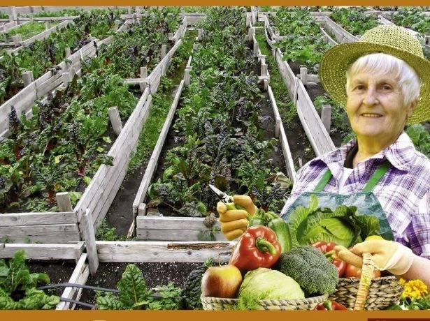 Как вырастить рассаду томатов в «пелёнках» по методу галины кизимы