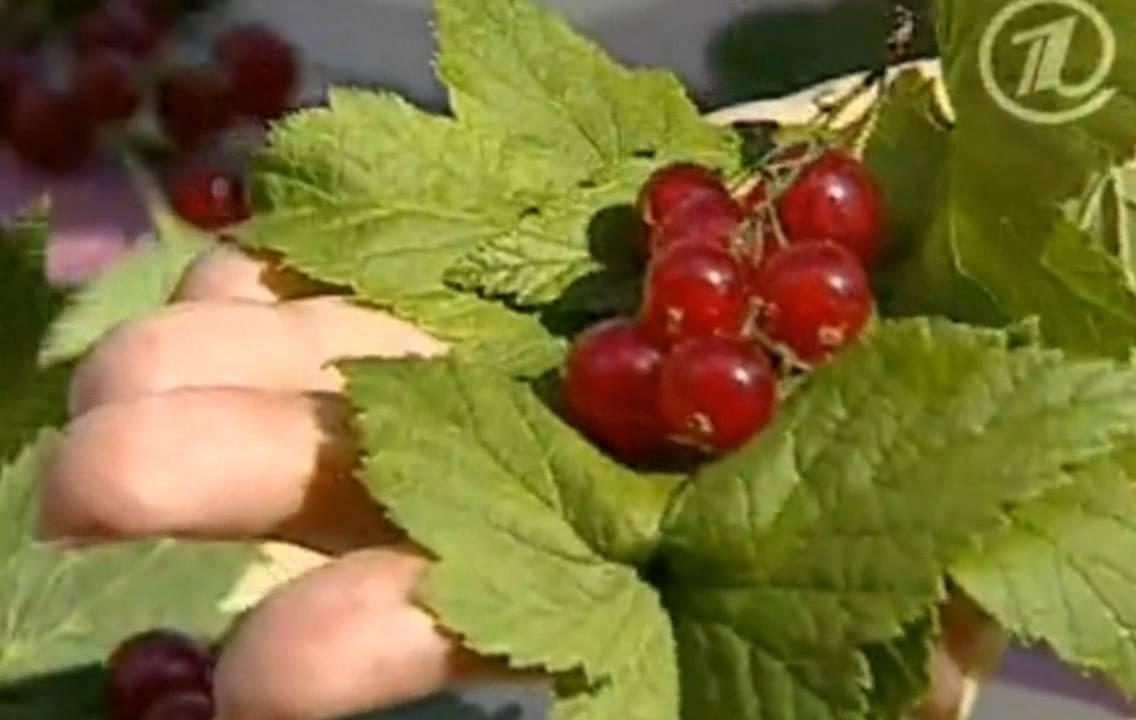 Самые полезные ягоды, их свойства + таблица содержания кбжу, витаминов и минералов