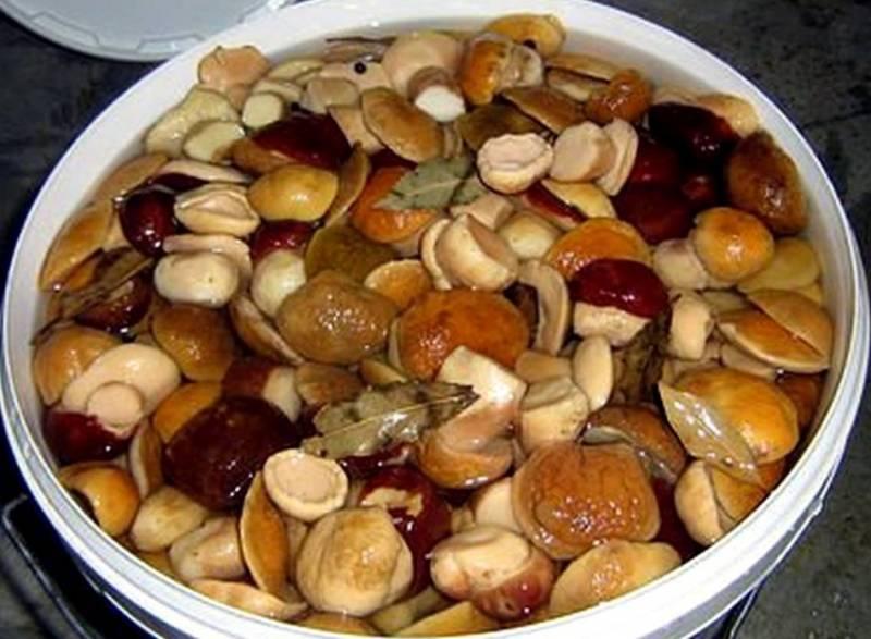 Срок хранения консервированных грибов в домашних условиях