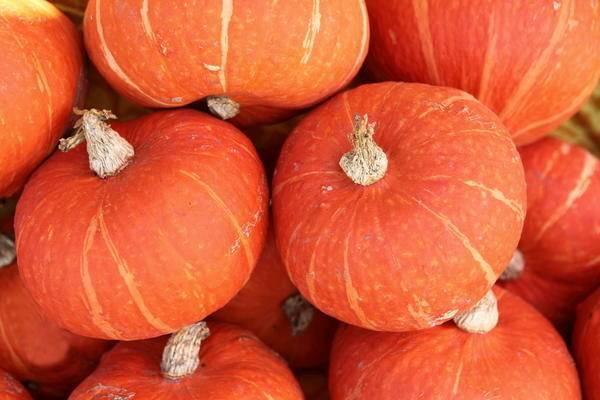 Правила выращивания тыквы в открытом грунте, способы посадки и особенности ухода