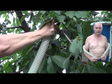 Самодельные приспособления для сбора вишни с высоких деревьев