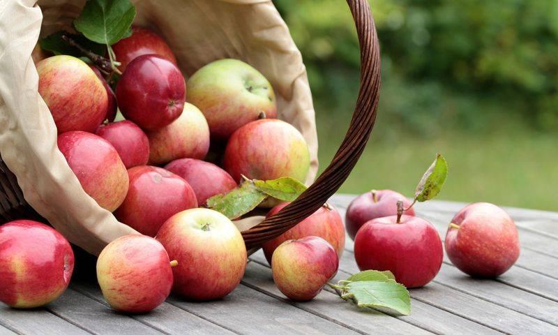 Характеристика cорта яблок белый и розовый налив