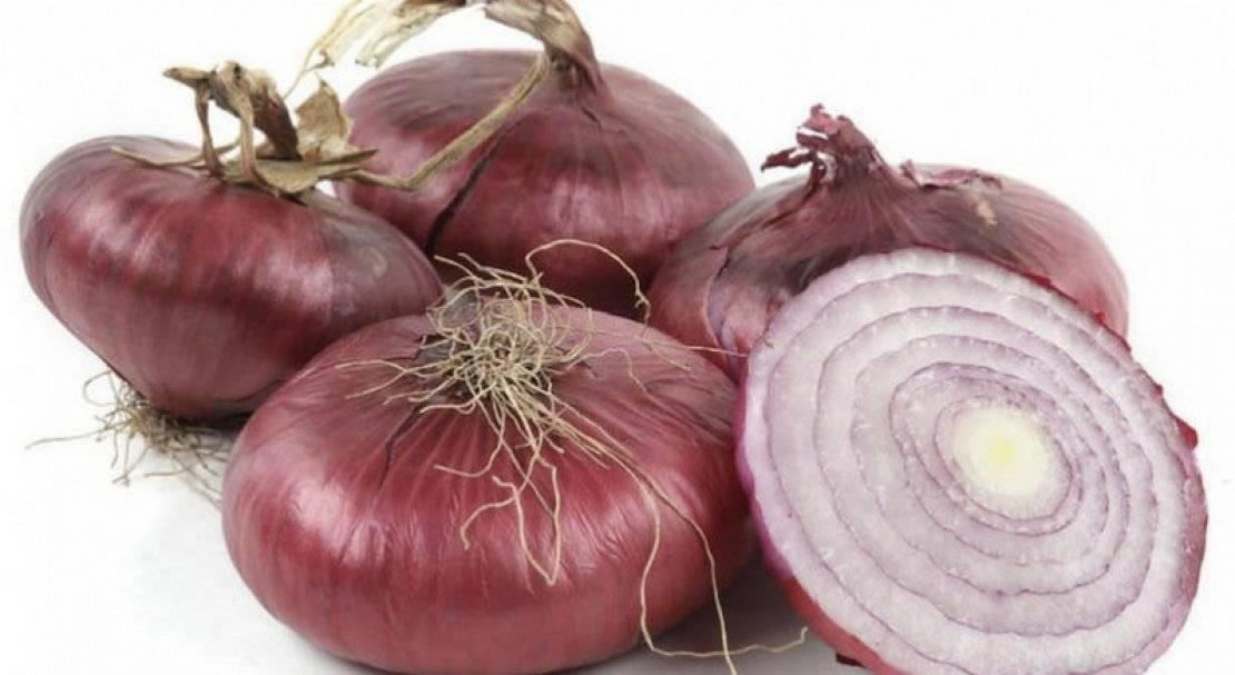 Крымский лук — полезные свойства, особенности сорта, посадка и уход