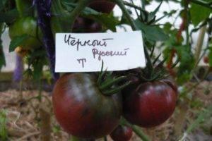 Томат граф орлов: описание, выращивания и урожайность с фото