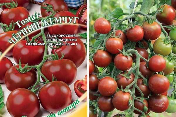 Сорт томата «жемчужина красная»: фото, отзывы, описание, характеристика, урожайность
