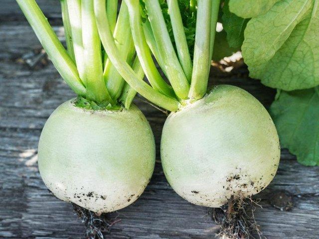 Редька зеленая — полезные свойства и вред для здоровья, противопоказания
