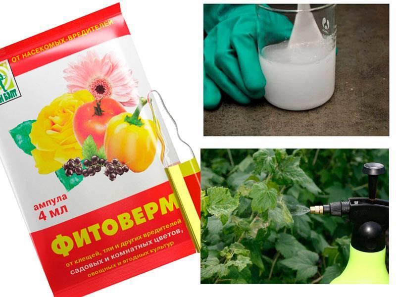 Фитоверм – инструкция по применению для растений, отзывы