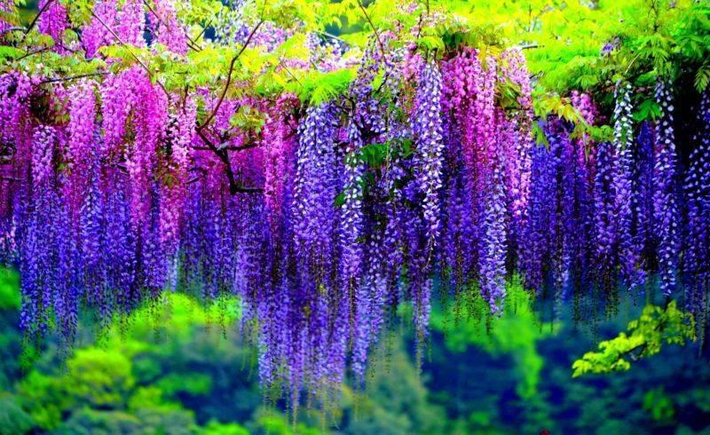 Цветы для клумбы, цветущие всё лето