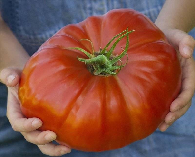 Характеристика и описание томата «зеленый гигант»