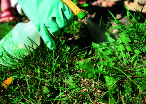Какие гербициды выбрать для обработки клубники от сорняков