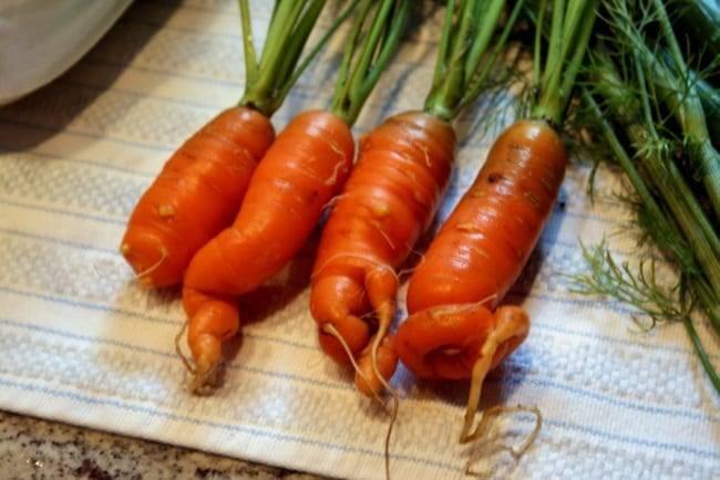 Как правильно поливать морковь от посадки до сбора урожая