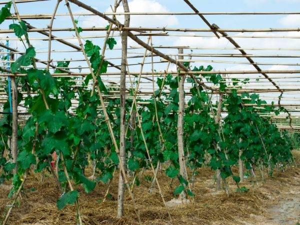 Как проращивать рассаду огурцов в опилках