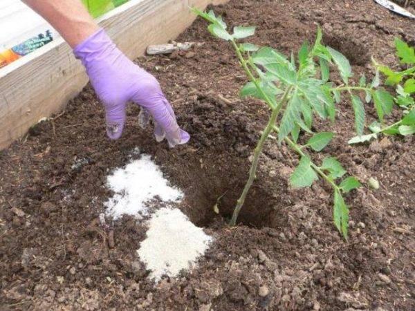 Кальциевая селитра для огурцов: пошаговая инструкция по применению подкормки для начинающих огородников (125 фото + видео)