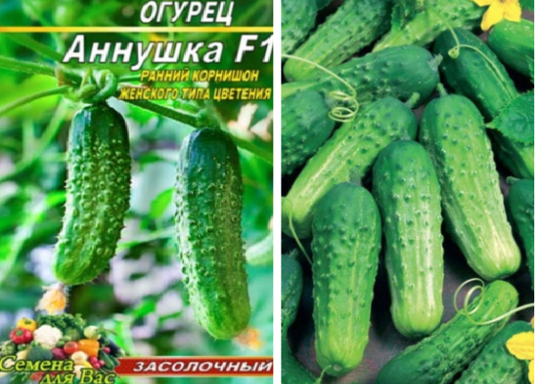 Огурец клодин характеристика и описание сорта выращивание и уход с фото