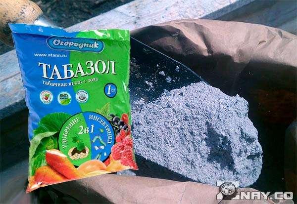 Как табачная пыль спасает от тли