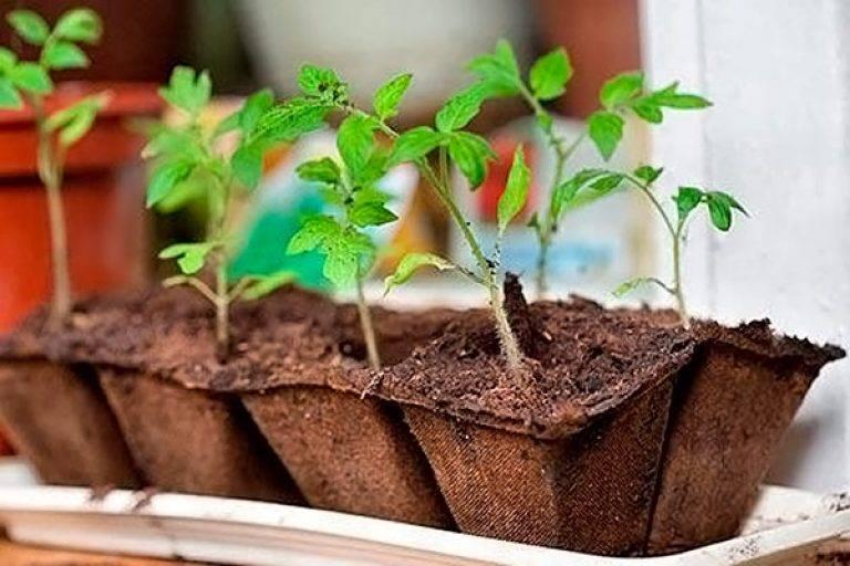 Как посадить томаты (помидоры) семенами в открытый грунт