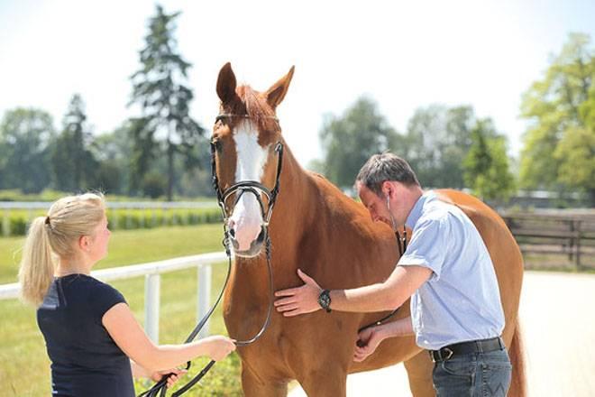 Какие болезни бывают у лошадей и как правильно их лечить