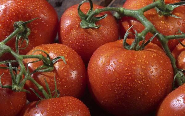 Характеристики, достоинства, особенности выращивания гибридного томата «кострома»