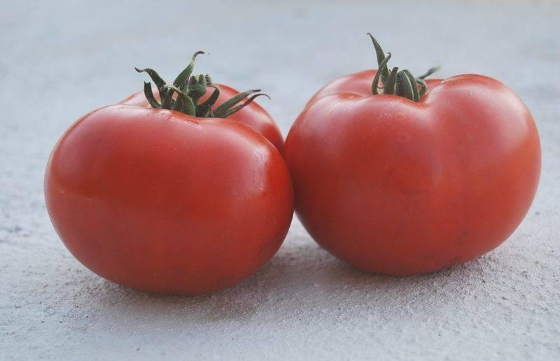 Томат ирина характеристика и описание сорта. гибрид с хорошей урожайностью — томат ирина f1: урожайность сорта и его описание