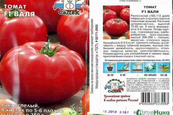 Описание и характеристики сорта томата валентина, его урожайность