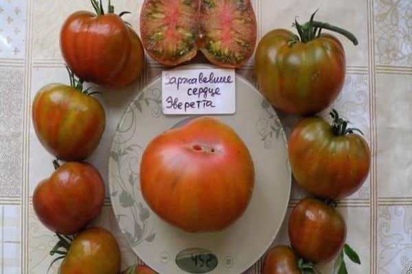 Описание сорта томата Заржавевшее сердце Эверетта и его характеристика