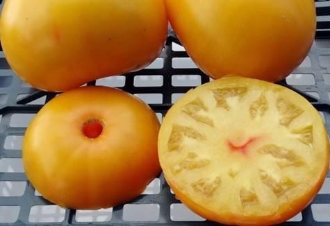 Характеристика и описание сорта томата Бабушкин поцелуй, его урожайность