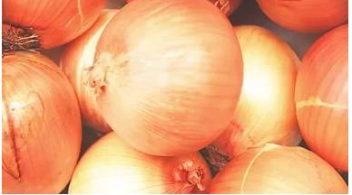 Лук халцедон — универсальный и неприхотливый сорт