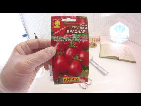 Томат сорта красная груша
