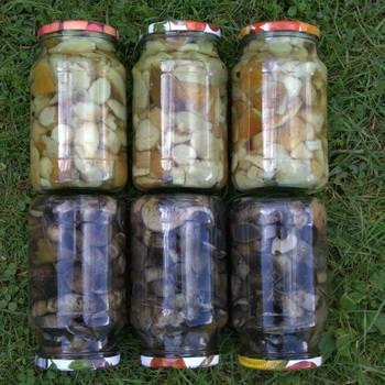 Сколько можно хранить маринованные грибы домашнего приготовления