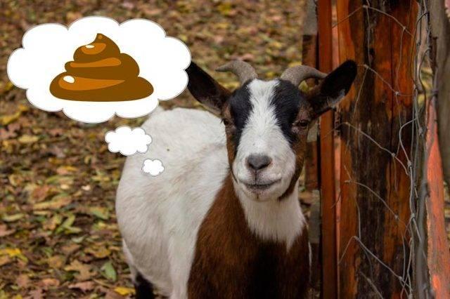 Как и чем лечить понос у коров