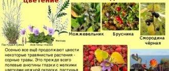 Как подкормить огурцы куриным пометом в теплице и открытом грунте