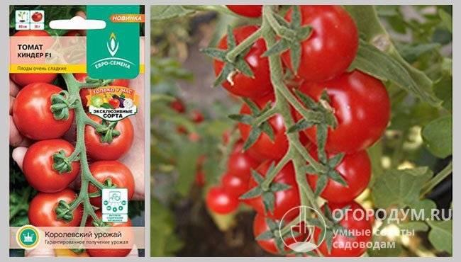Великосветский f1 – гибрид томата, способный удивлять. описание особенностей и техника выращивания
