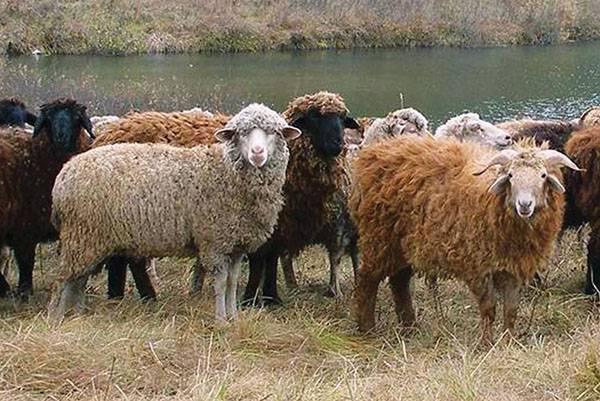 Быстрый откорм быков: правила составления рациона, эффективные программы, использование добавок