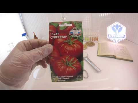 Томат суперэкзотик: описание и характеристика сорта, урожайность с фото