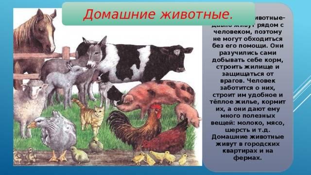 Описание и характеристика овец породы дорпер, особенности их содержания