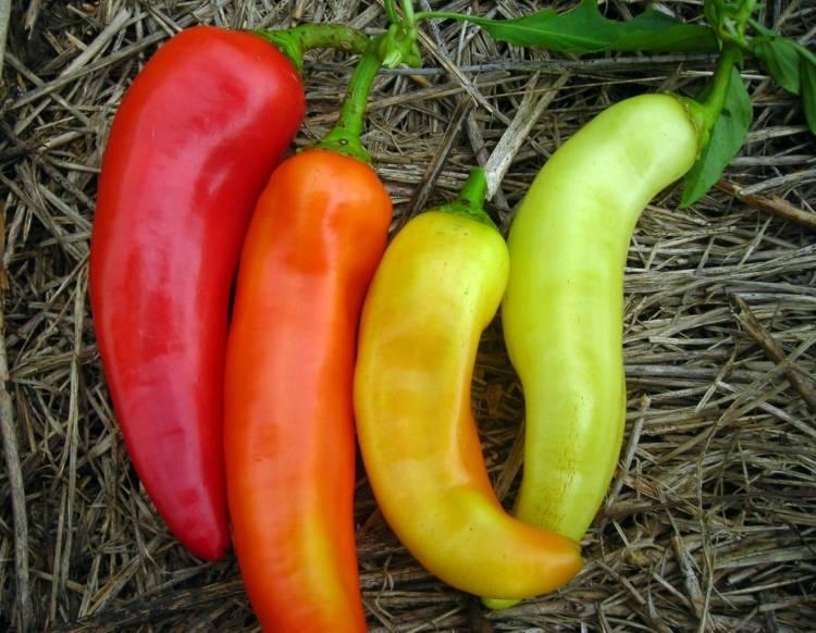 Удивительно вкусный и невероятно полезный перец — сорт «какаду»: выращивание и разведение