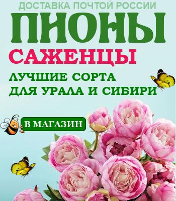 Болезни и вредители пионов: описание с фотографиями и способы лечения цветов